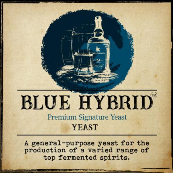 Blue Hybrid AR
